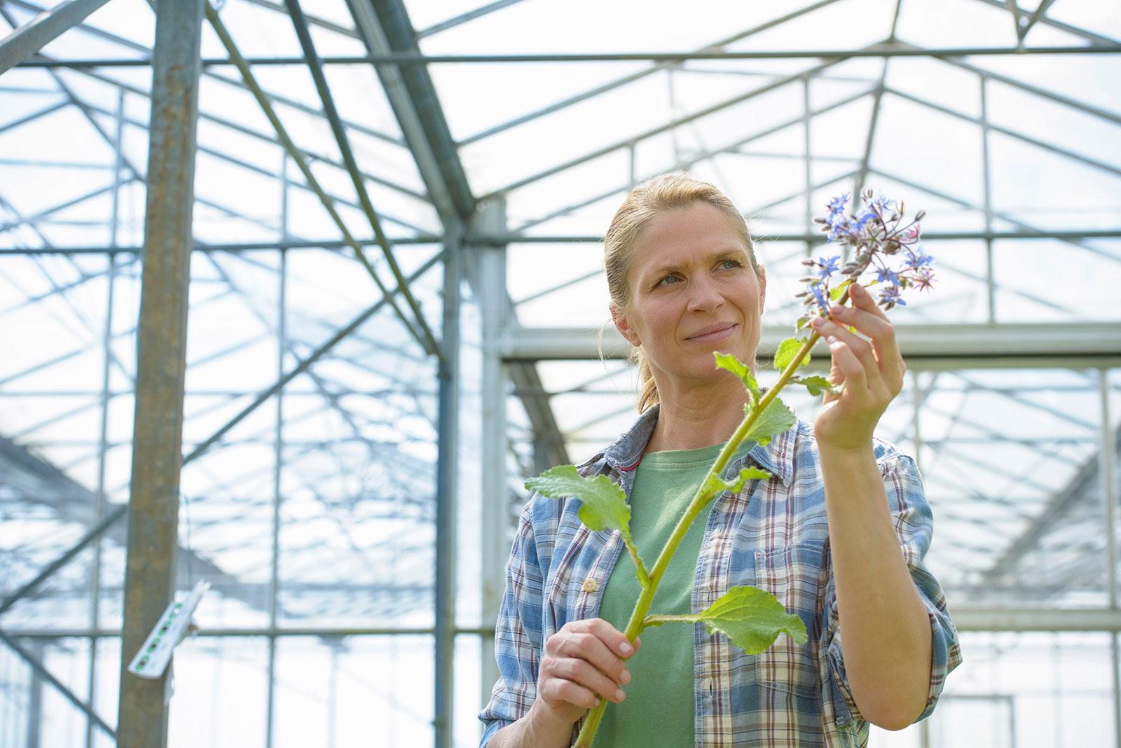 woman-with-borage-plant